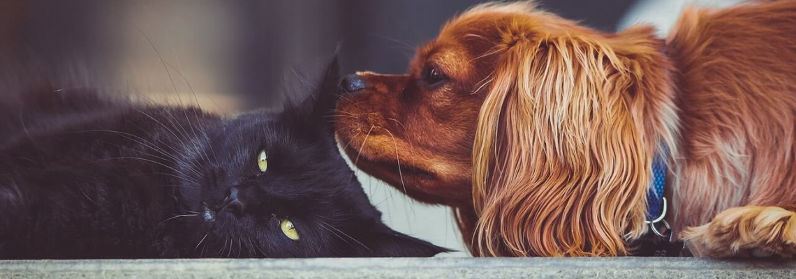 Chien et chat - Cat & dog