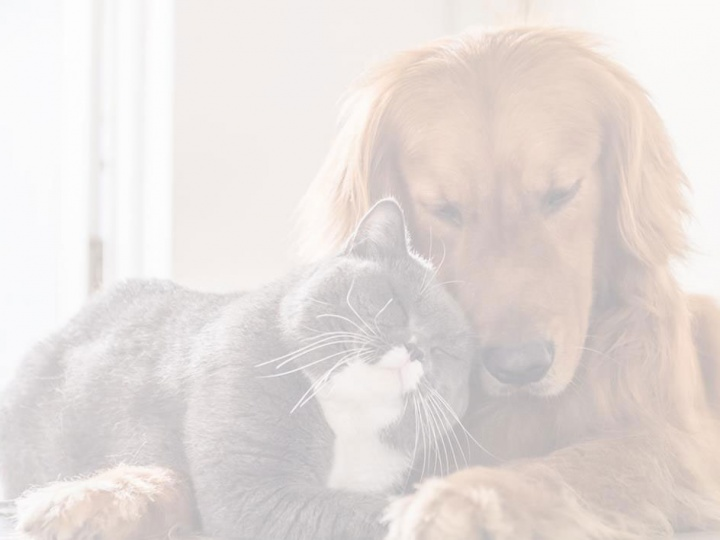 Chat et chien / Cat & dog