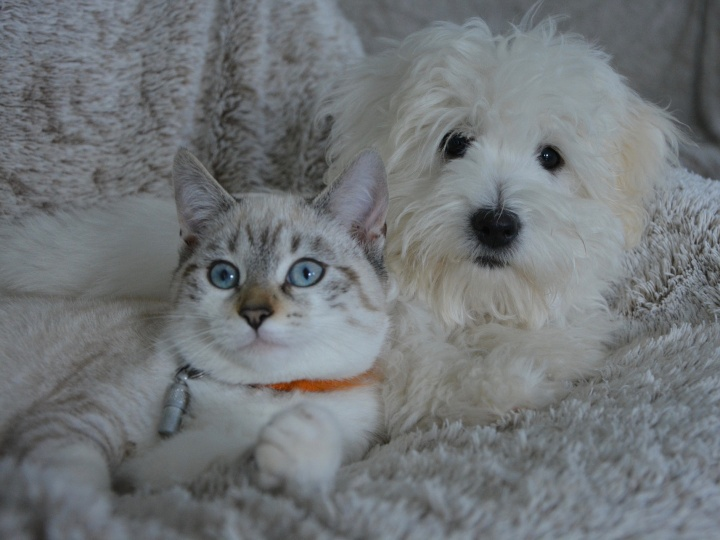 Chat et chien / Cat and dog