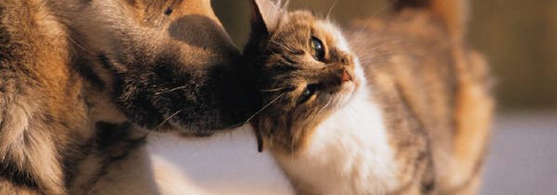 Chat & chien / Dog & Cat