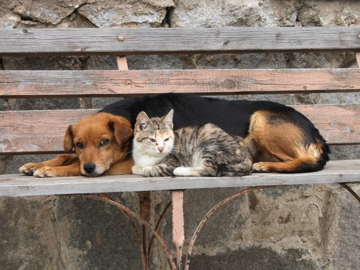 Chien + Chat / Dog + Cat